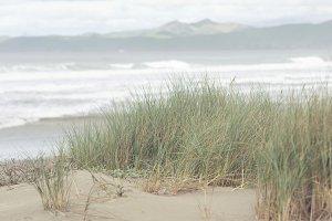 Dune Grass 2 of 3