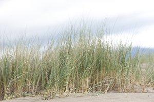 Dune Grass 3 of 3