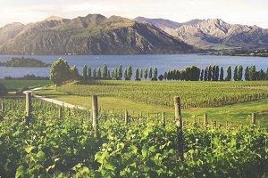 Beautiful countryside in New Zealand