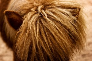 Close-up of horse mane