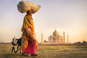 Indian woman and goats