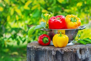 Fresh red and yellow peppers in the street in the garden on a tree stump