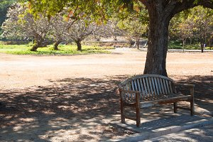 Bench under a tree.