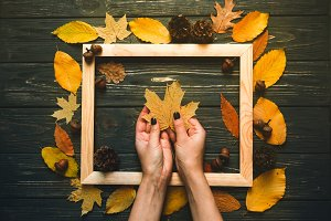 Autumn maple leaves woman hands