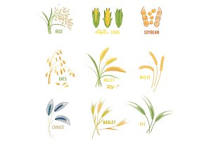 Cereal Plants vector icons illustrations.