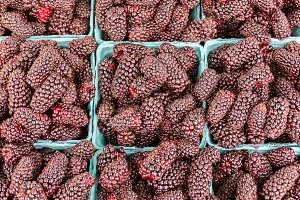 Marionberries in boxes