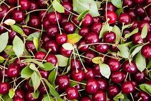 Sour pie cherries