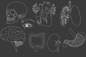 Human organs set vector illustration