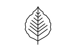 Poplar leaf linear icon