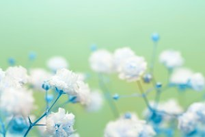 White flower soft