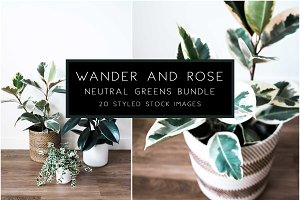 Neutral Greens Styled Stock Photos