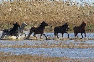 Wids horses