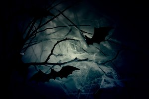 Bats on branches