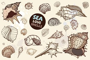 Sea Love Shells. Vector set