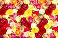 Roses. Flowers