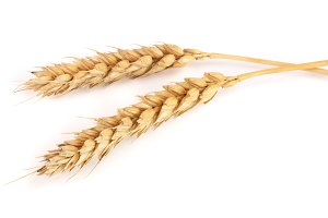 two ears of wheat isolated on white background. Top view