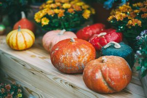 Still life with colourful pumpkins