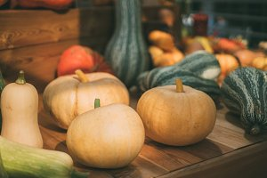 Squashes and pumpkins, harvest
