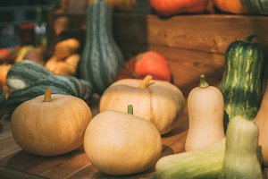 Multiple pumpkins and marrows