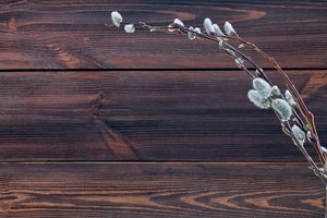 willow on wooden background