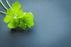 parsley on a dark background.