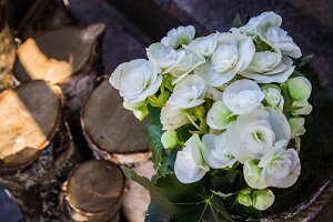flowers on a tree stump