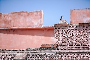 Curious Bird