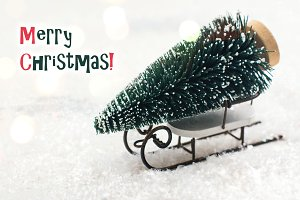 Small fir tree on white sledge. Merry Christmas greeting card