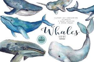 Whale clip art watercolor