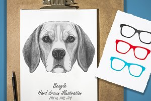 Beagle / Glasses