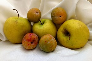 Apples and plums on white cloth