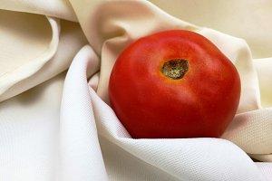 Tomato on white cloth background