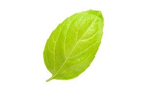 One single leaf of oregano isolated on white background