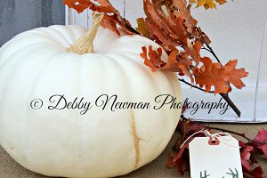White pumpkin, leaves, and deer tag