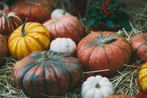 Halloween various pumpkins