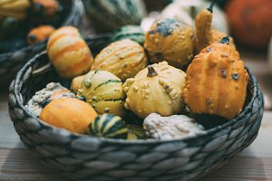 Decorative inedible pumpkins