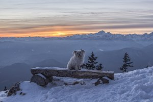 Dog on Bench at Mountains Sunset