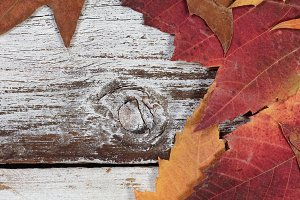 Fading Foliage on old wood