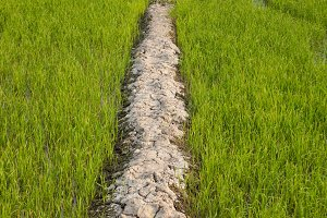 path to the field.