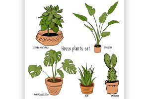 Color houseplants Vector set