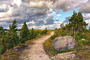 Road in the dunes of the Baltic