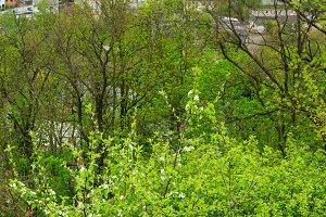 Buchach town spring view (Ukraine).