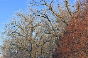 Veteran's Memorial Park Trees