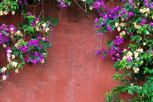 climbing plants on an old red wall