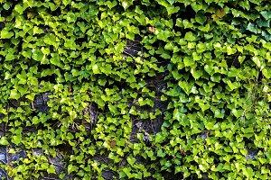 Texture of green plant closeup