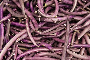 Purple string beans