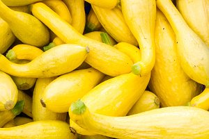 Yellow crook neck squash