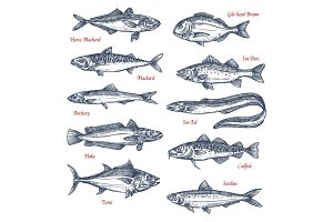 Vector sketch icons of sea and ocean fish
