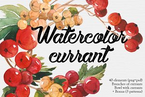 Watercolor currant