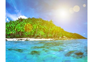 Beautiful wild subtropical isle with palm trees